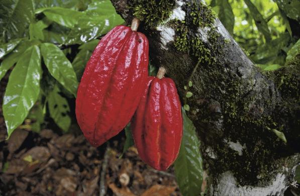 Episode 2: Die Reise unseres Kakaos