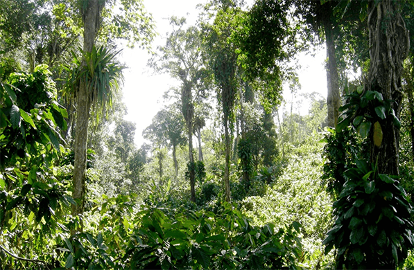 Room 2.2: Where our Cocoa grows Continue your Cocoa Journey. Cocoa trees grow in the subtropical climate within the global cocoa belt. Learn more about the growing areas of our cocoa, its harvest times and different varieties. Some of our farmers will tell you what they particularly appreciate about their partnership with Läderach.