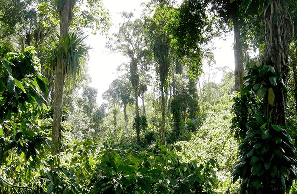 Wo unser Kakao wächst Setzen Sie Ihre Cocoa Journey fort. Die Kakaobäume wachsen im subtropischen Klima innerhalb des globalen Kakaogürtels. Erfahren Sie mehr über die Anbaugebiete unseres Kakaos, dessen Erntezeiten und unterschiedlichen Sorten. Einige unserer Farmer erzählen Ihnen, was sie besonders an der Partnerschaft mit Läderach schätzen.